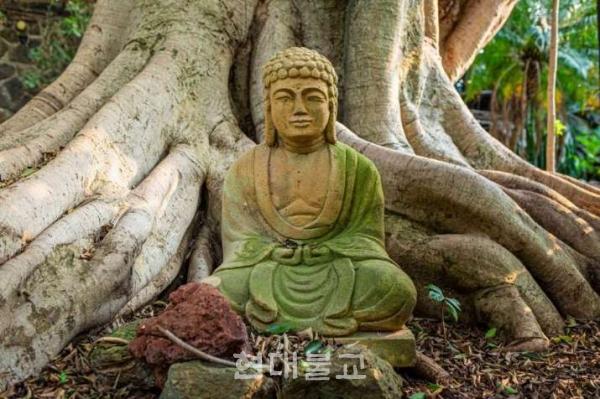 인도의 전문가들이 불가촉천민인 달리트들에게 불교를 종교로 선택하라고 제안했다. 사진출처=deccanherald.com